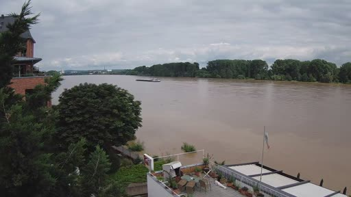 Il fiume Reno dalla Webcam